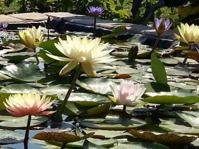 """""""Eine wunderschöne Blume im Qigong-Garten"""": Dayan-Kurs 14-tätig in Seligenstadt/Offenbach, Intensiv-Workshop + Aktivurlaub am Meer"""