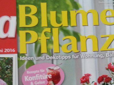 Frau Wildgans in der Zeitschrift Lisa Blumen & Pflanzen