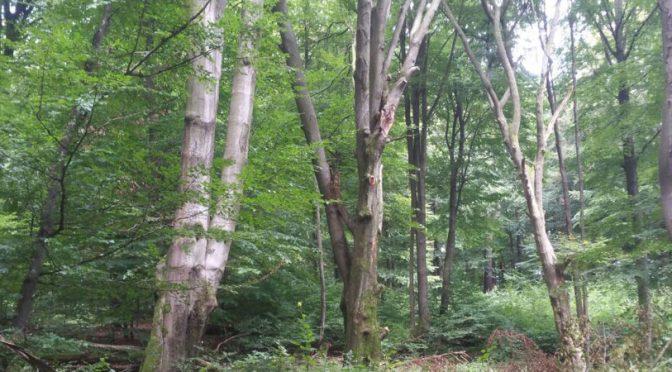 Untrainiert über 20km Nordic-Walking in Barfuss-Schuhen + Qigong
